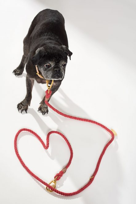 Dog 44_Recycled leash_Red