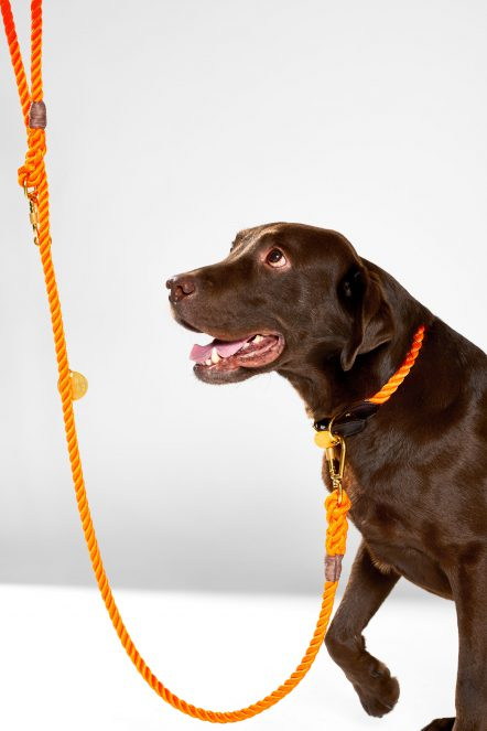 Dog 57_Nylon orange set