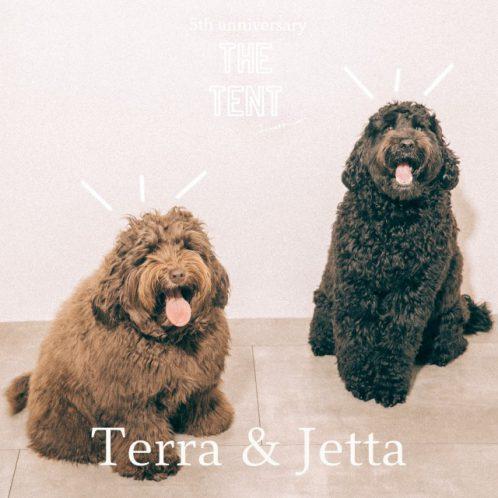 terra_jetta